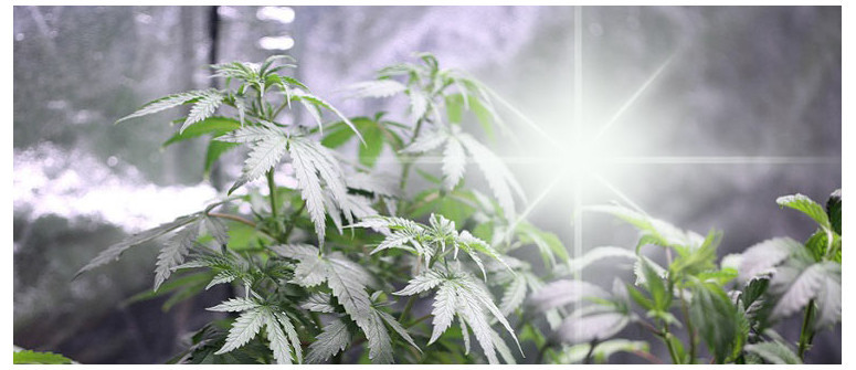 The 3 best reflective wall materials for your marijuana grow room