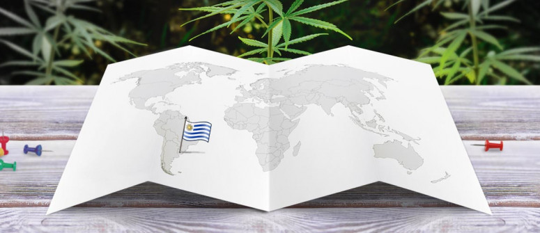 Legal Status of Marijuana in Uruguay