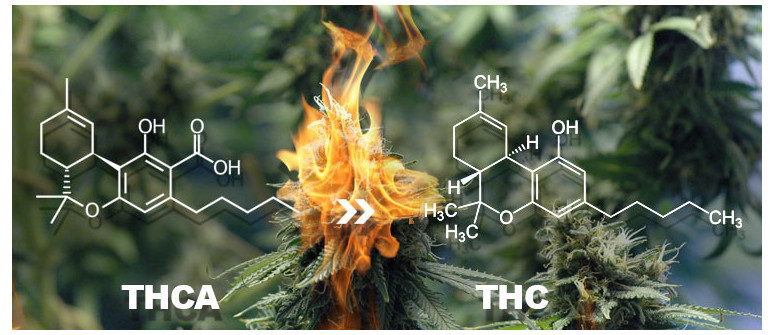 THCA and THC, what is the difference?