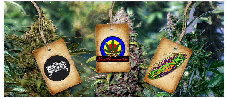 New Breeders online: The Kush Brothers, NGSC and Subcool's The Dank