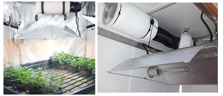 Odor control and growing marijuana indoors - How to eliminate the smell