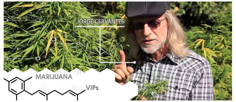 Marijuana VIP: Jorge Cervantes