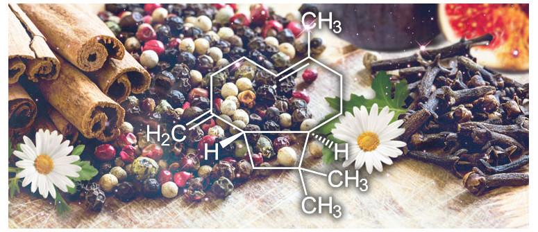 Terpene Profile: β-Caryophyllene