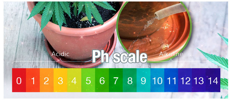 The best ph value for cannabis plants