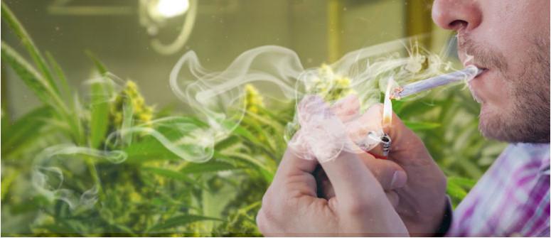 Do my cannabis plants mind me smoking near them?