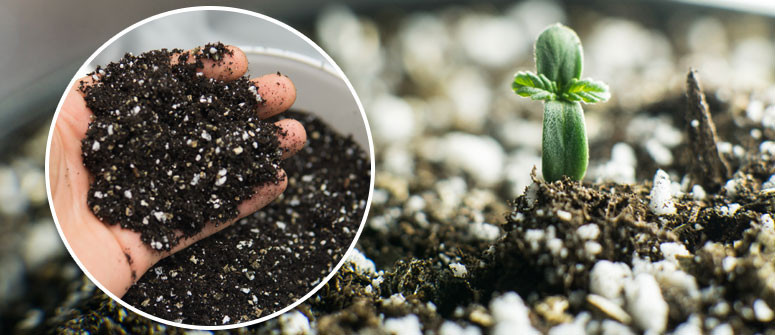 How to make your own fertilizer for cannabis plants