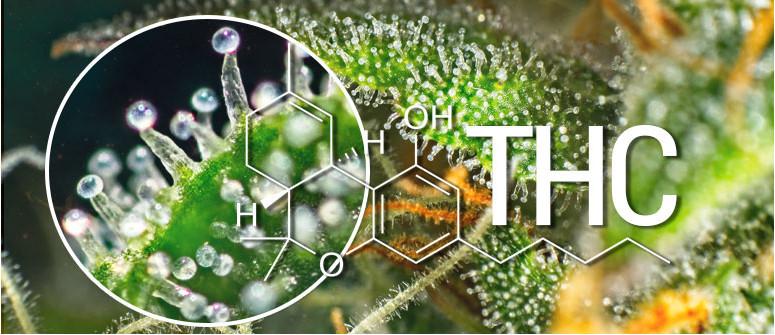 What is THC (delta-9-tetrahydrocannabinol)?
