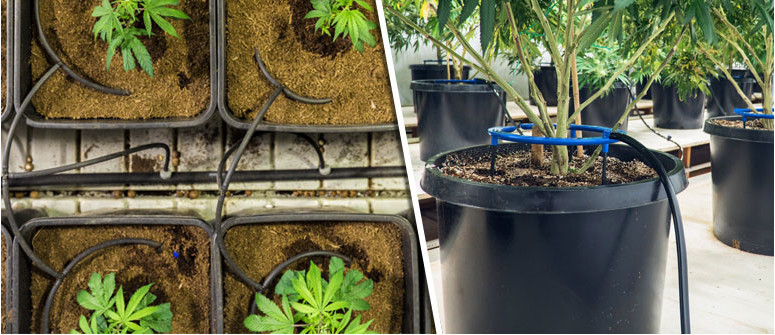 How does drip irrigation work with cannabis?