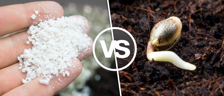 Organic vs synthetic fertilizers: Which is best for cannabis?