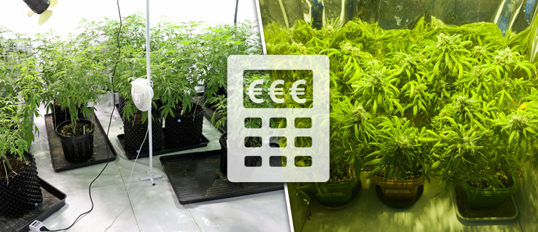 How much does it cost to grow marijuana indoors?