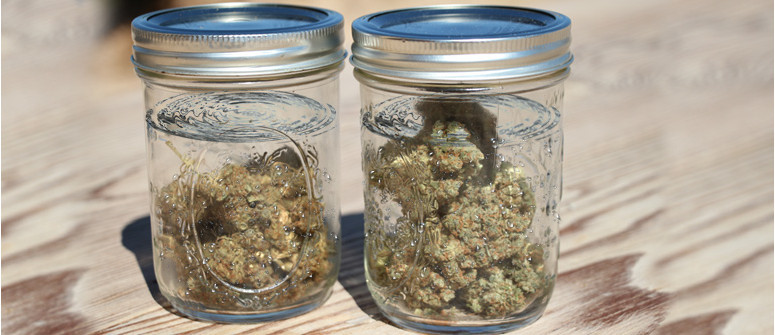 Water curing of marijuana buds