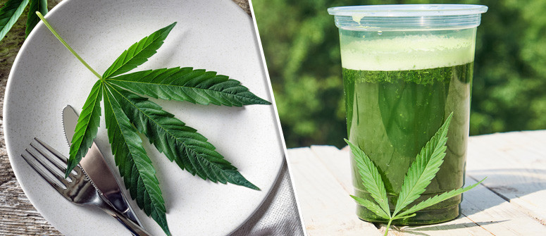 The benefits of adding raw cannabis to your diet