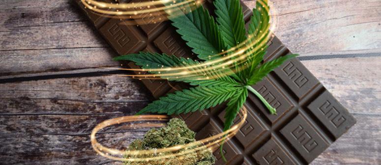 How to make cannabis chocolate - an easy recipe