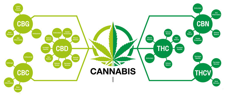 How are cannabinoids made?