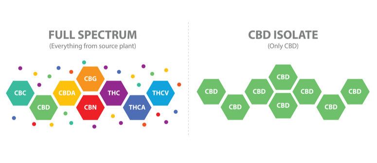 Full-spectrum CBD oil vs CBD isolate: What's the difference?