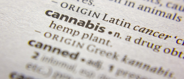 Cannabis terminology: all the common terms