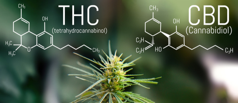 What Is the Best CBD:THC Ratio in Cannabis?