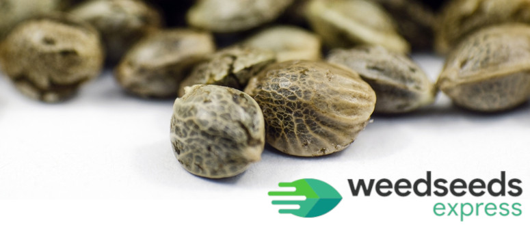 Review: Get To Know Cannabis Seed Bank Weedseedsexpress
