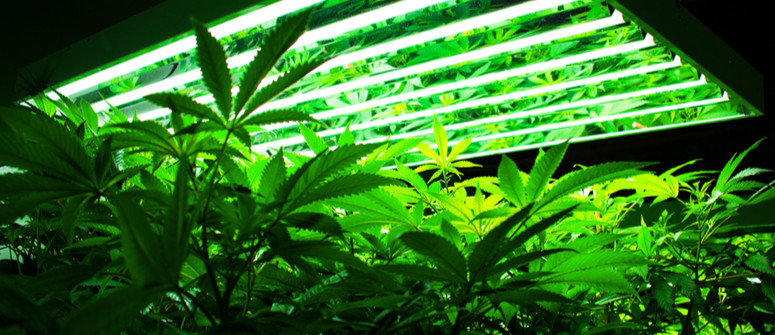 What Are the Best Grow Lights for Cannabis?