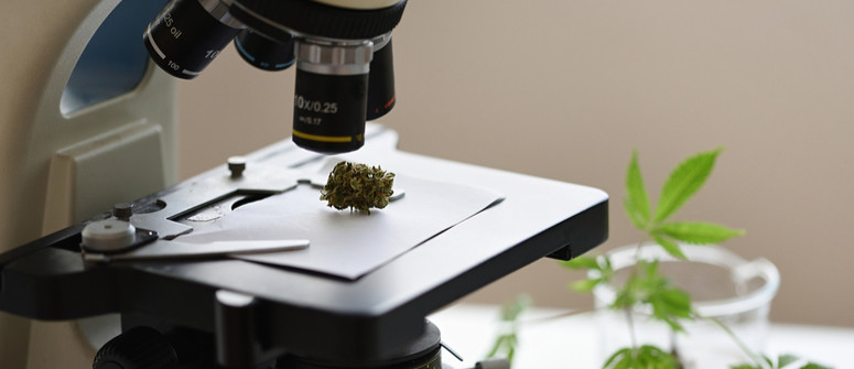Cbd vs cbg: what is the difference?