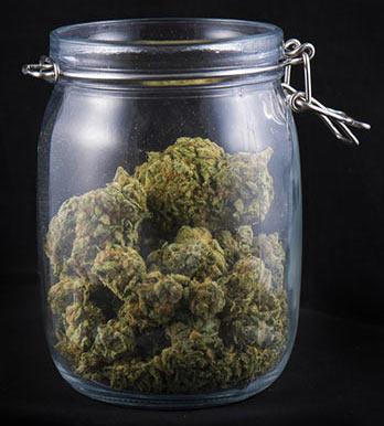 Come conciare correttamente le cime di cannabis
