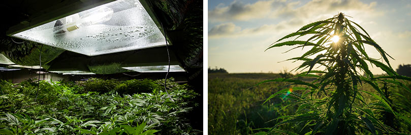 ARE YOU GROWING INDOORS OR OUTDOORS?