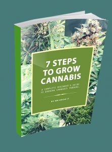 7 steps to grow cannabis