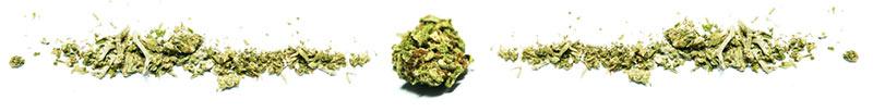 Cosa significa 4/20 nel mondo della cannabis?
