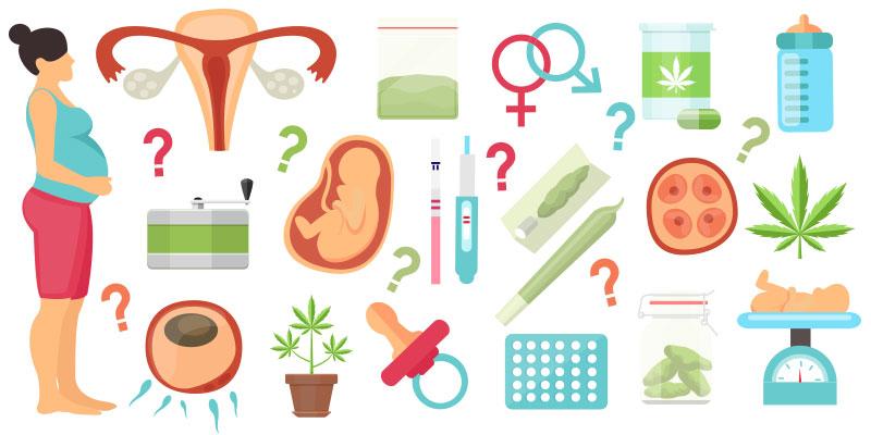 So, should pregnant women smoke cannabis?
