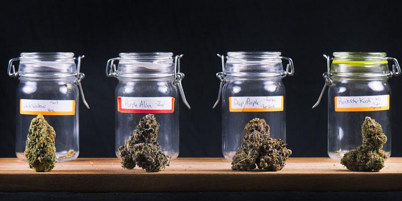 Tutti i tipi di cannabis provocano doposbronza?