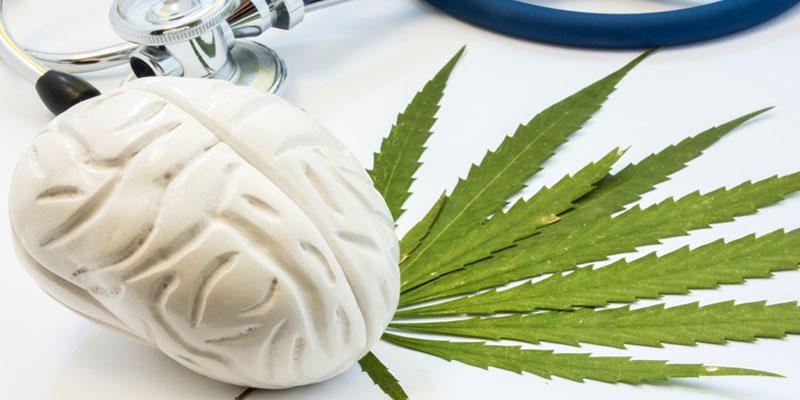 ¿quizás el cannabis preserva las células cerebrales?